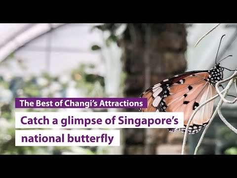 Changi welcomes guests to first airport butterfly garden
