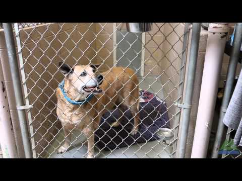 About Multnomah County Animal Services