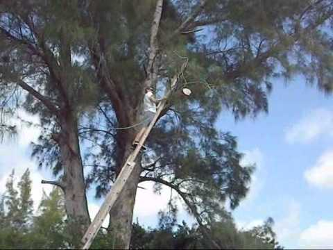 How To Cut A Tree Limb Using A Rope And A Ladder Youtube