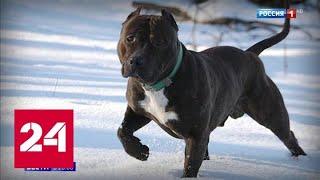 Прогулка с риском для жизни: можно ли защититься от нападения бойцового пса - Россия 24