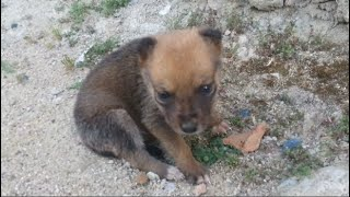 A lost little puppy needs help
