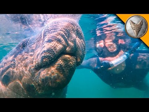 Thumbnail: Swimming with Giants!