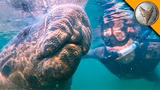 Swimming with Giants! thumbnail