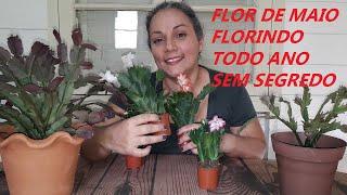 Flor de Maio Florindo Todo o Ano sem Segredo
