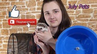 Колесо для ежика!!!  Какое выбрать ??? The best wheel for a hedgehog!