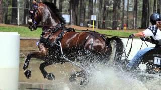 uminco 2014 usef horse of honor
