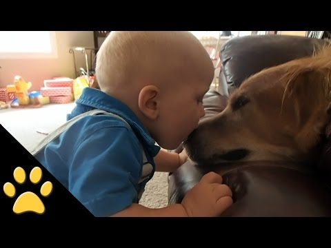 Cute Dogs And Adorable Babies: Funny Compilation