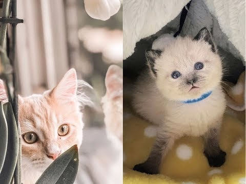 Cute cats and kittens   funny cats and    cute little pets animals