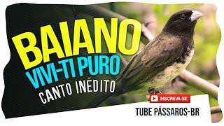 Papa Capim Viviti com Intervalo - Canto Inédito 2019 (Exclusivo)