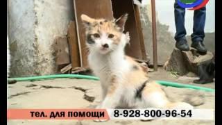 В Махачкале может появиться первый в Дагестане приют для бездомных животных