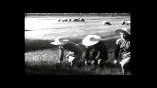 INAIL - Riflessi in risaia