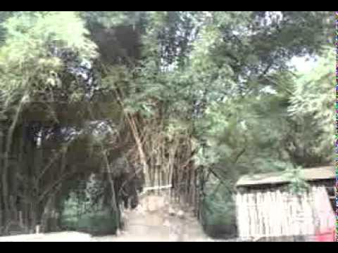 Cabinda-Bambo