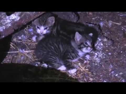 2 Kittens Rescued from Grain Silo