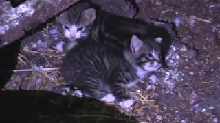 2-kittens-rescued-from-grain-silo