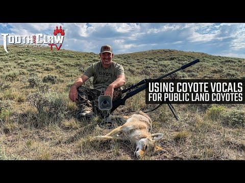 Using Coyote Vocals for Public Land Coyotes – Coyote Hunting