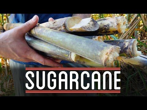 Sugarcane | How to Make Everything: Chocolate Bar