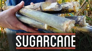Sugarcane | How to Make Everything: Chocolate Bar