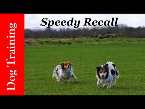 Dog Training Tips. How to teach the best ever recall