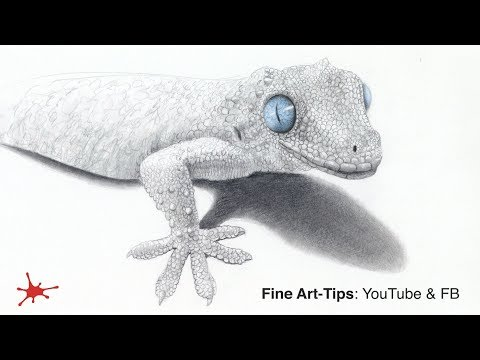 how-to-draw-a-gecko---narrated