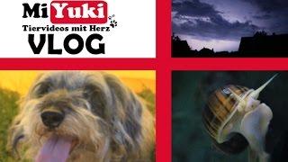 Miyukis♥Vlog: Sommertage, Schneckennamen und Gewitter