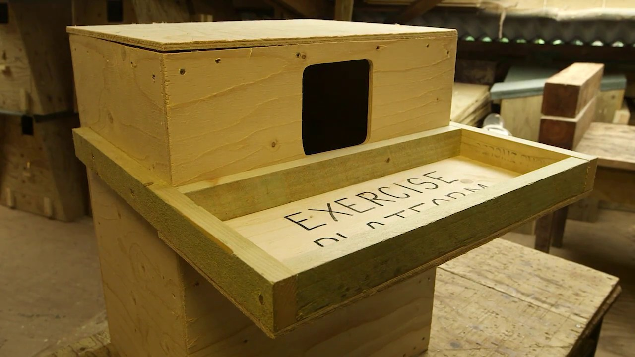 barn owl nestboxes: free owl nest box plans