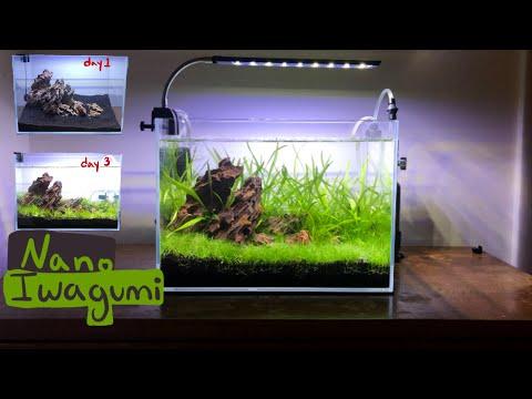 making-an-iwagumi-nano-aquascape-:-high-tech-6-gallon-aquarium-with-ember-tetras