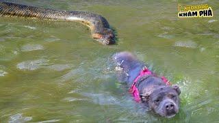 ⚡ 8 Trận Tử Chiến Ác Liệt Nhất Giữa Rắn Độc Và Chó Được Camera Ghi Lại