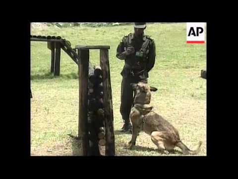 COLOMBIA: DRUG TRAFFICKING & SNIFFER DOGS