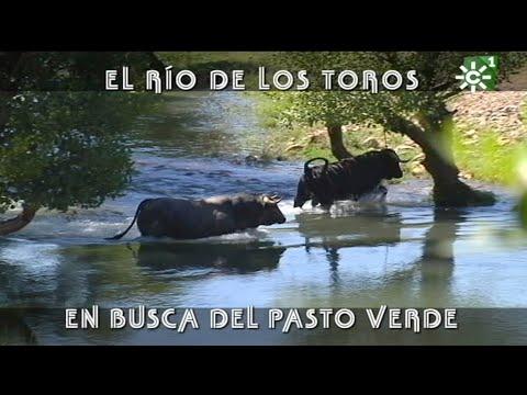 PGM 426 Toros en RÍO ARAUZ DE ROBLES