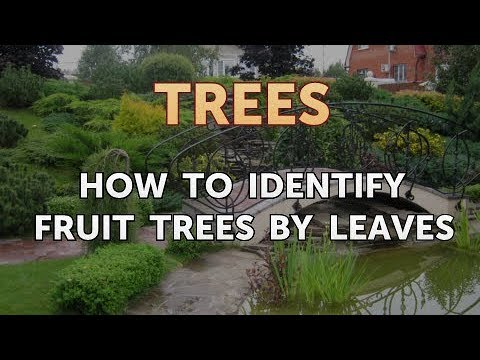 How to Identify Fruit Trees by Leaves