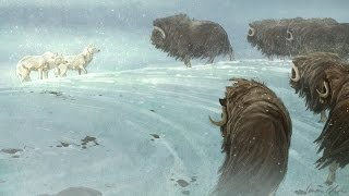 """Speed Paint - Photoshop - """"The Stand Off"""" Arctic Wolves and Musk Ox"""