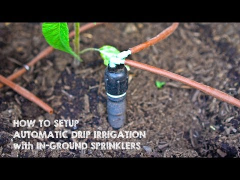 How to Setup Drip Irrigation with In-Ground Sprinklers