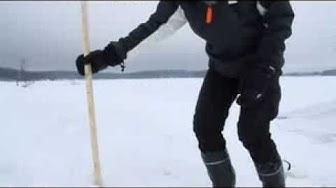 WWF:n vapaaehtoiset kolaavat saimaannorpalle apukinoksia