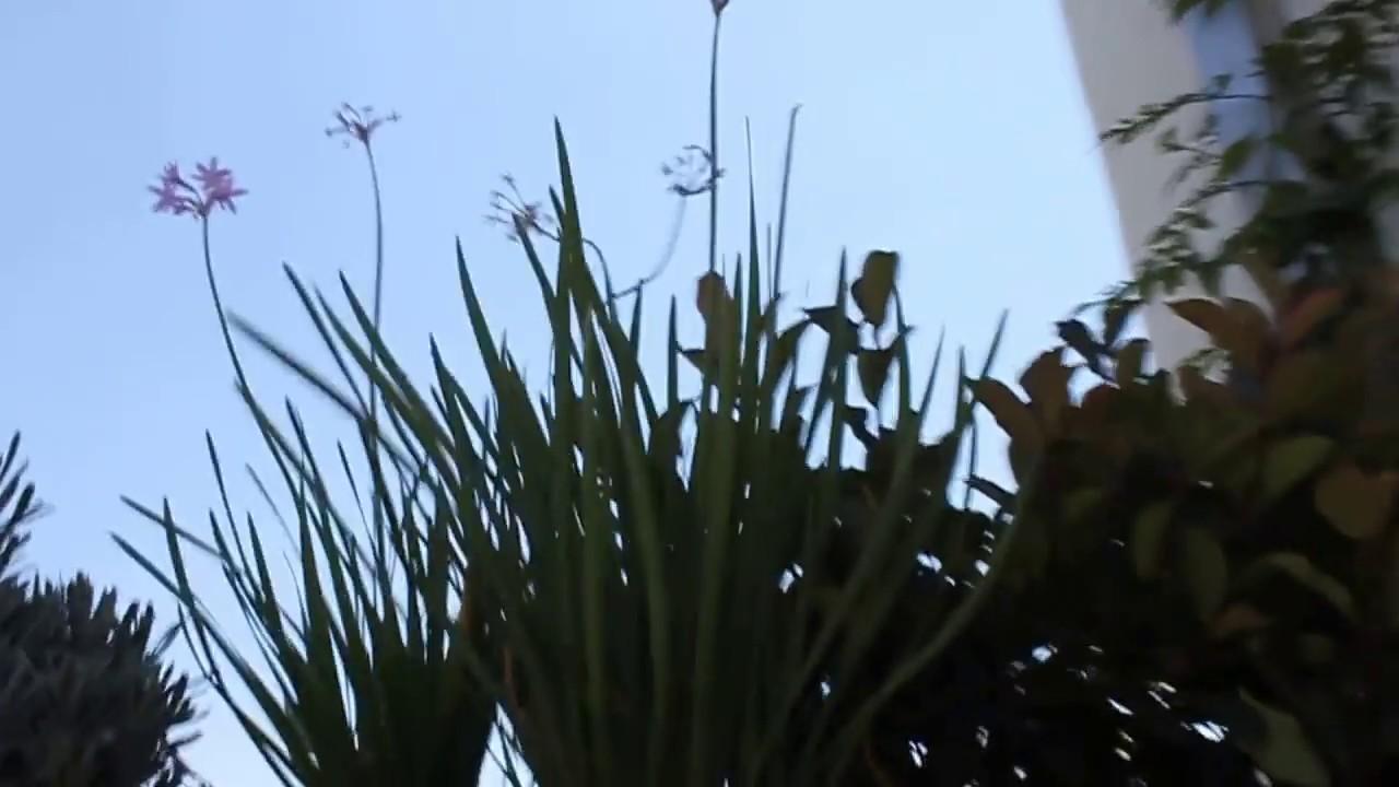 Jard n de dise o en terraza de atico con decoraci n y - Disenos de terrazas ...