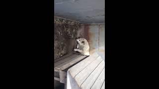 гибель собаки от изониазида