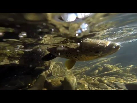 Winter Trout Fishing In Columbus, OH