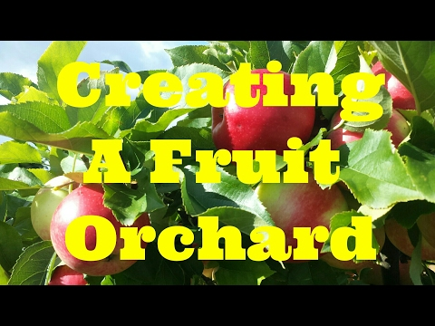 How To Start A Fruit Orchard | The Ultimate Movie Guide