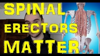 EXERCISE Your Erector Spinae Muscles To Prevent Lower Back Pain & Deadlift More Weight!