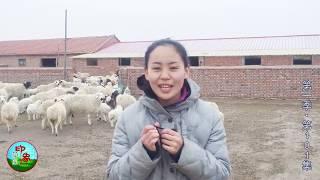 【原创】乌音嘎带您到牧区羊圈看看会有怎样的趣事发生? 【印象草原】原...