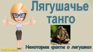 Лягушачье танго || PHOTO LAND (фото лягушки, лягушки и жабы, виды лягушек)