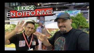 MEXICO PRESENTE EN LA EXPO MASCOTAS DE CHINA||||||😉🐕🐠🐭