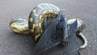 Домашние Змеи нападают. Купил змею и пожалел. Змея напала на человека