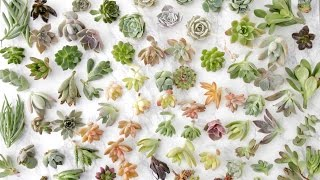 Succulent Unboxing Garden Answer