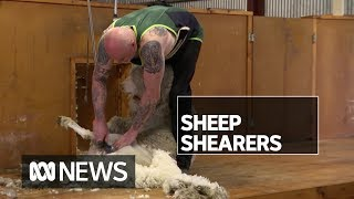 Reports of drugs supplied as payment for work in wool industry | ABC News