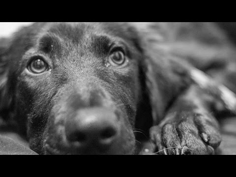 Animal Rescue (Music Video) - A look at