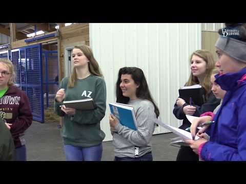 Minor In Equine Science At The University Of Delaware