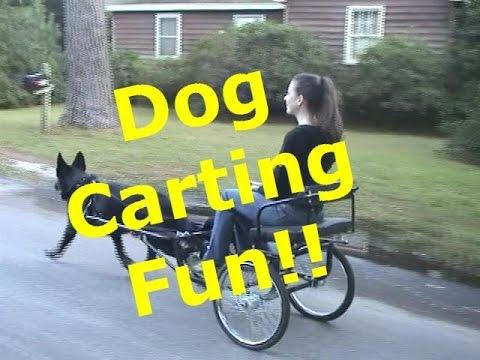 Dog Carting Demonstration