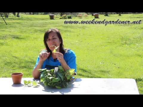 How to Propagate a Philodendron