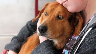 Jack, A Cute 5-year-old Beagle/lab Mix Adopted In Manahawkin, Nj