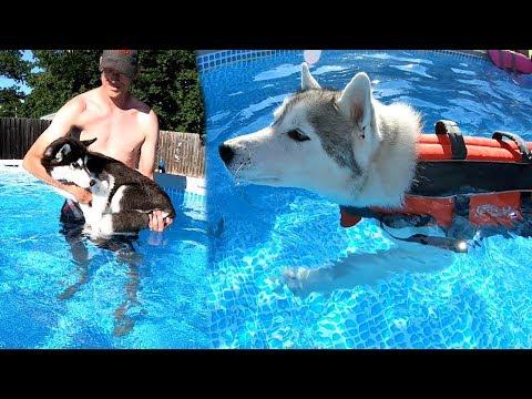 Huskies Swimming in their Own Pool